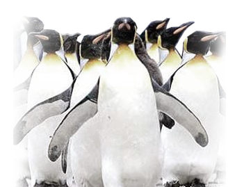 14&nbspEmperor Penguins